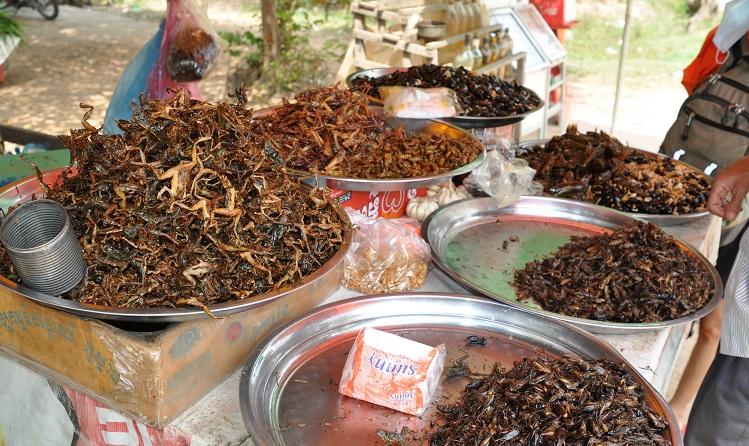 Insekten als Nahrung